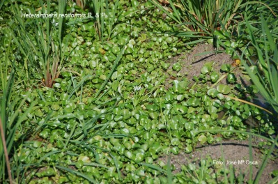 Mala hierba, como la de Valencia del PP.